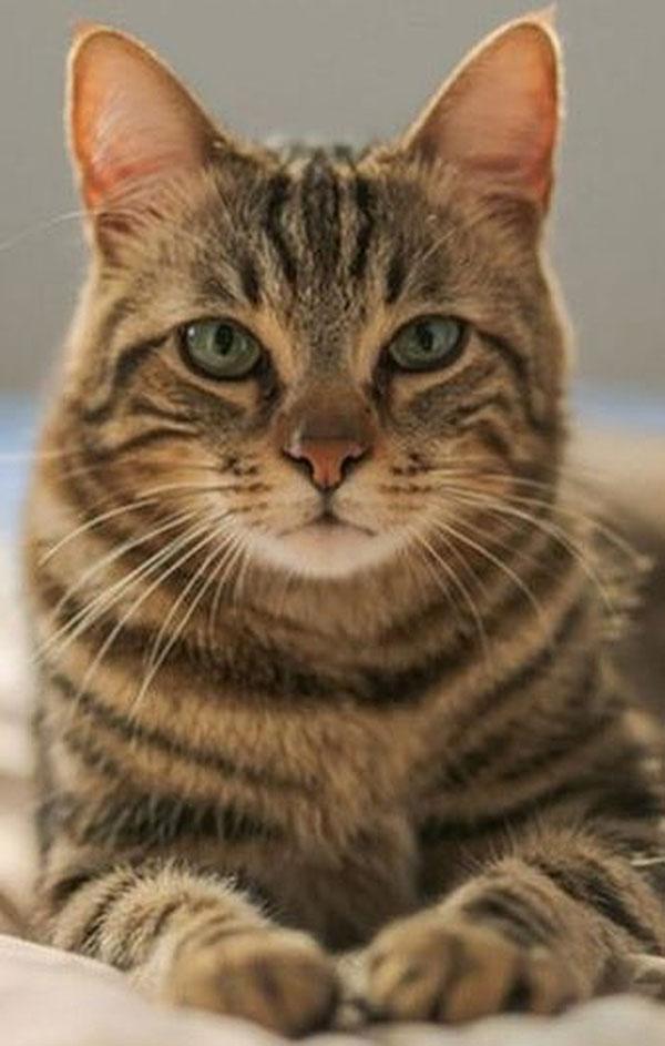 Green Balance CBD cat-gb CBD For Pets